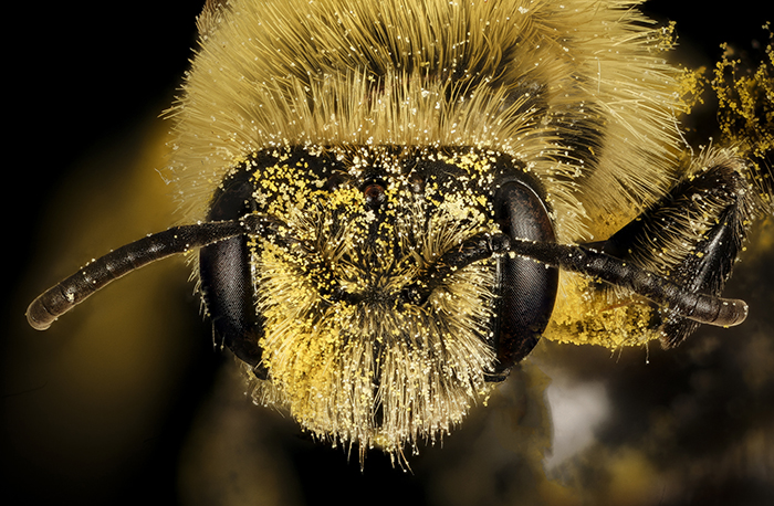 api rimanere giovani