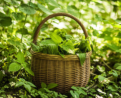 leggera erbe spontanee